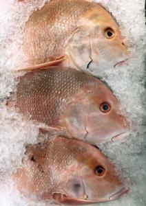 Fische in Eis